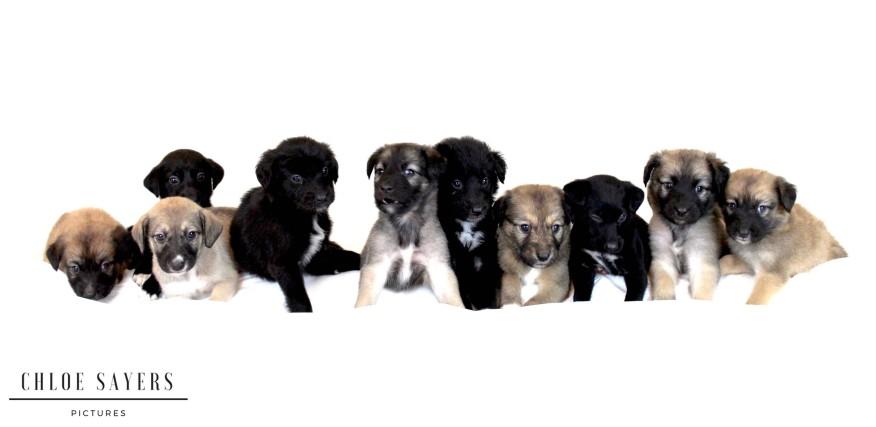 Puppies Photoshoot. September, 2017